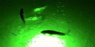 underwater green led fishing lights