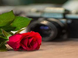 Gifts for Photography Lovers rose camera